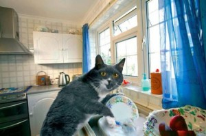 catcleaning2