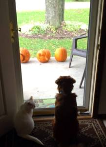 two-thirds of our pets like watching chubby squirrel, too