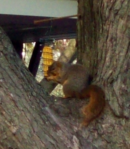chubbysquirrel 013