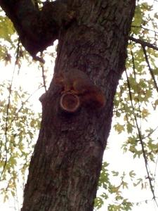 chubbysquirrel 021