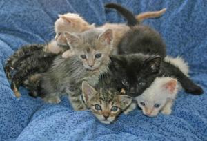 Kitten_pile