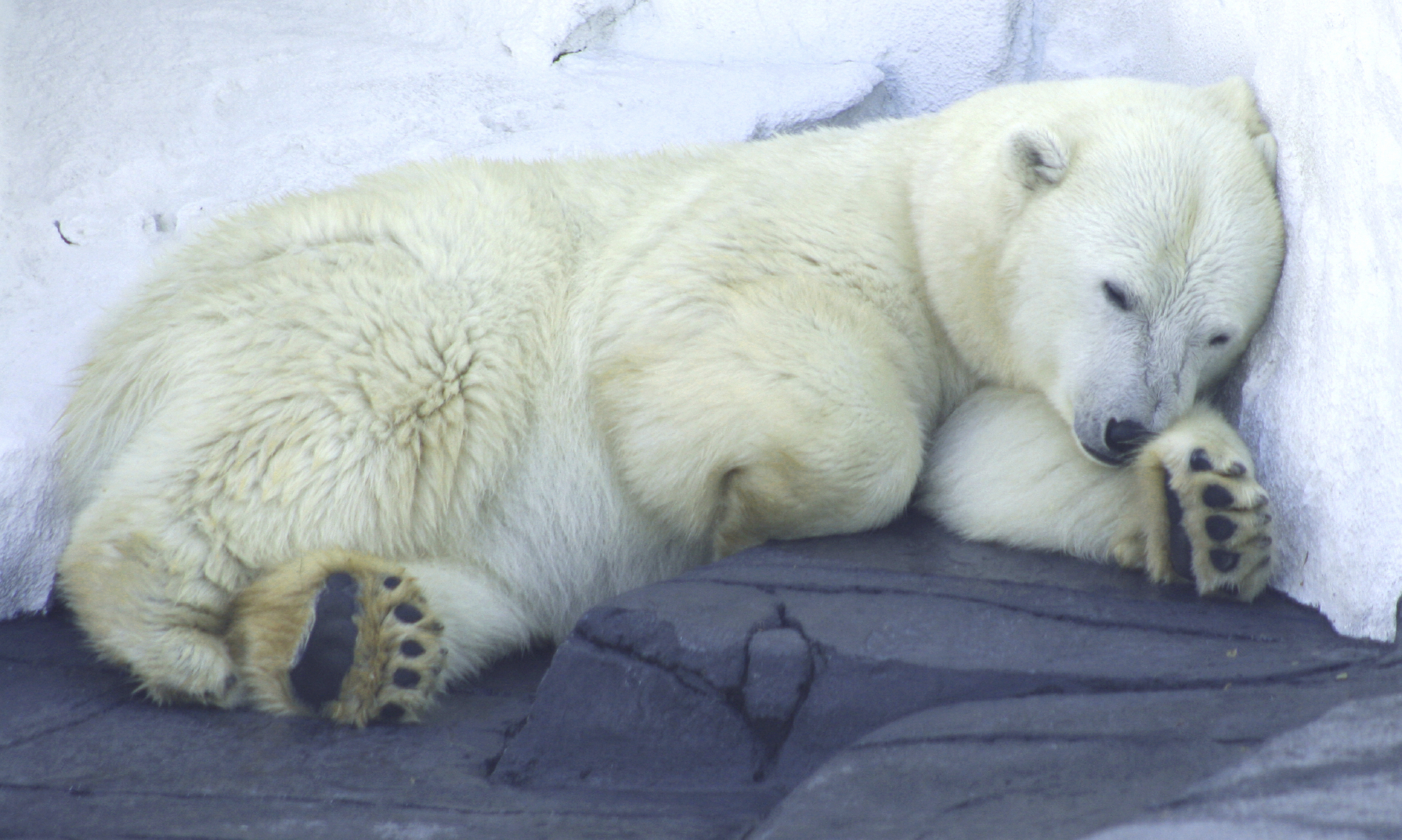 Animals That Hibernate - Hibernation animals go without food or water for months at a time