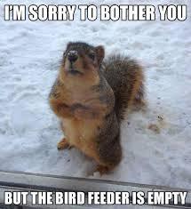 squirrel)1