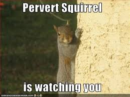 squirrel)2