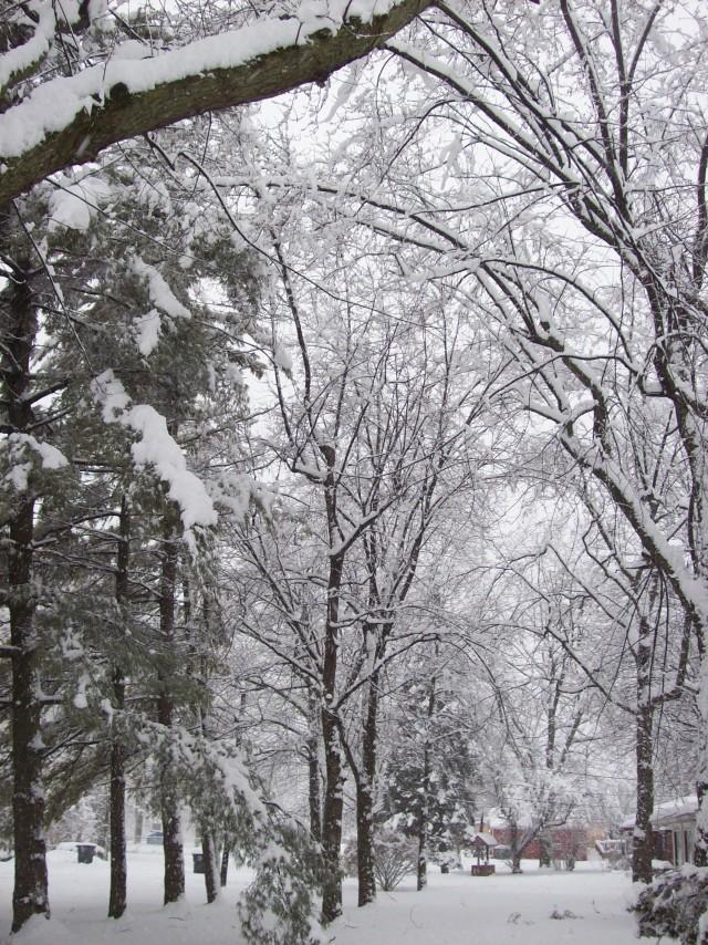 neige 008