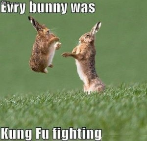 bunnies6