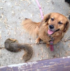 squirrel.killer