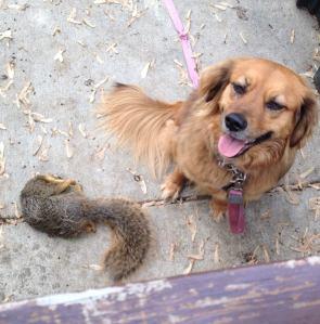squirrel.killer