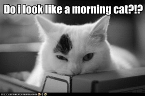 mornincat