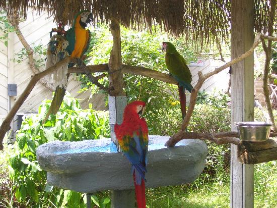 these-parrots-say-hello