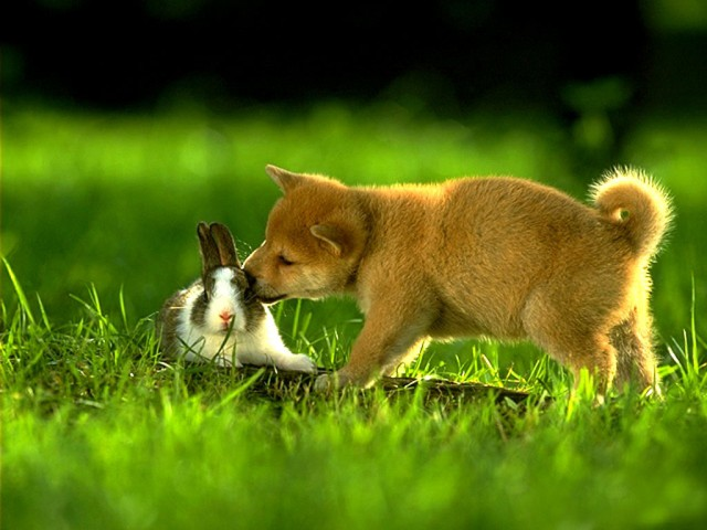 dogs-and-cats-dog-loves-rabbit_146260