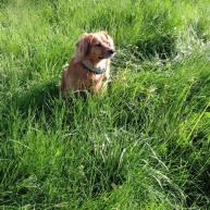 sadie likes the deep grass, but i prefer an adirondack chair, myself