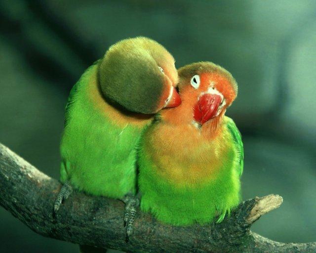 happiness_bird_65143-1280x1024