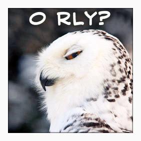 O-Rly-owls-13509350-282-282