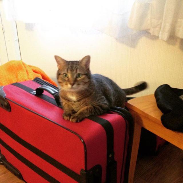 catticusbags