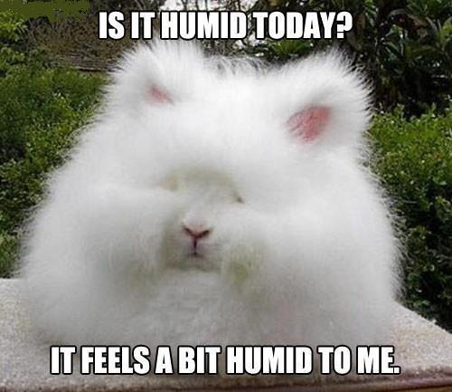 humid bunny[1]