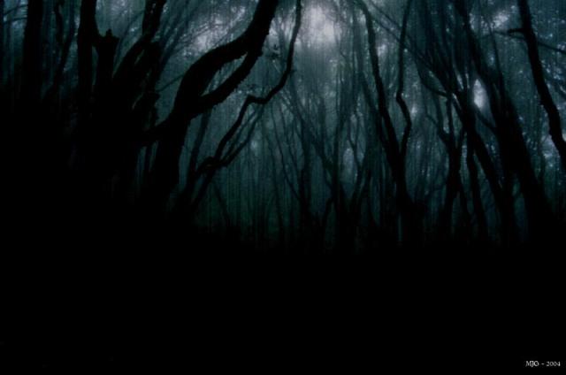 the_dark_woods_by_mjg