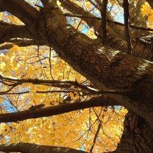 jim_tree