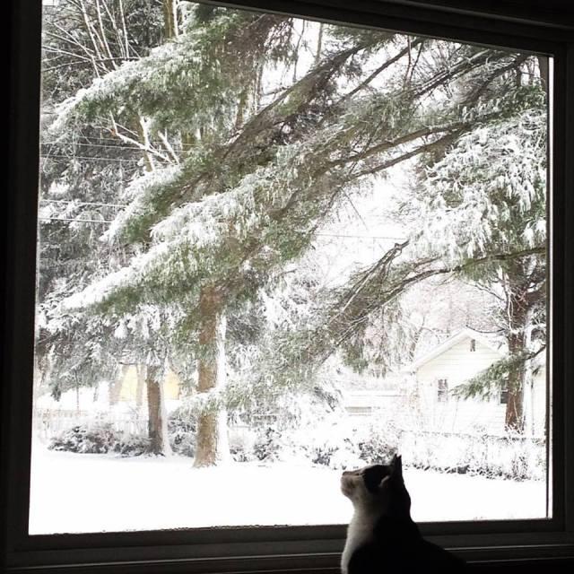 cletus_snow