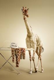 giraffe_ironing