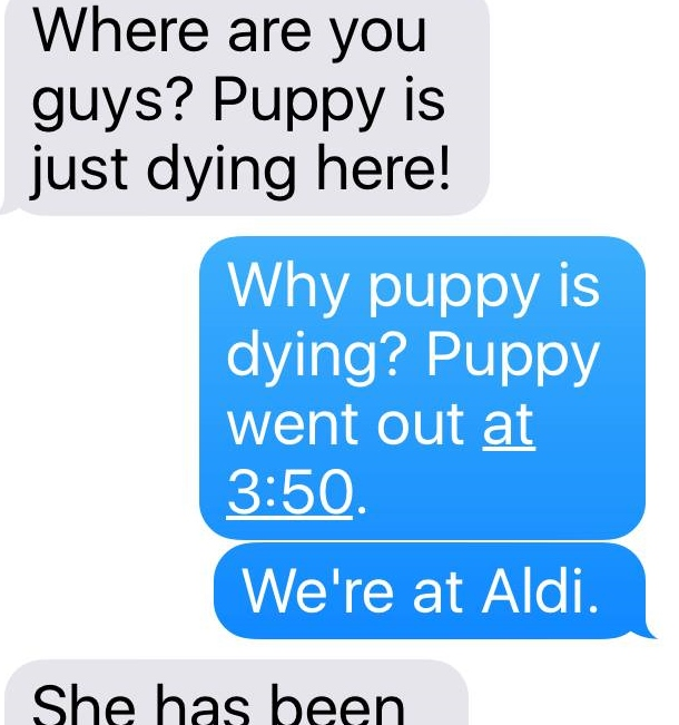 puppy_what1