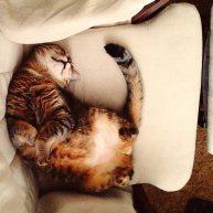 catticus_chair
