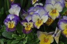 flower-369256__180