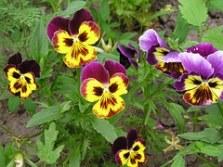 plant-1287947__180