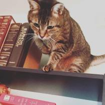 catticus
