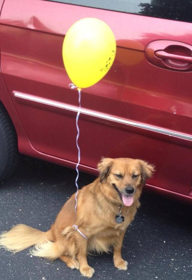 sadie-balloon