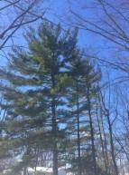 trees_20917