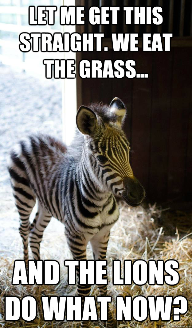 Let-Me-Get-This-Straight-We-Eat-The-Grass-Funny-Zebra-Meme-Image