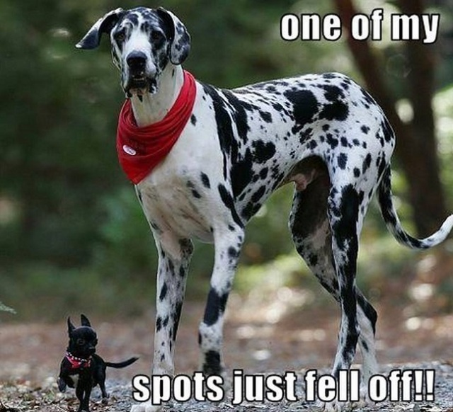 great-dane-meme-pup-dog