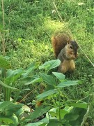 friendliest squirrel, likely offspring of chubby